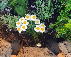 Why not plant flowers on your windowsill?